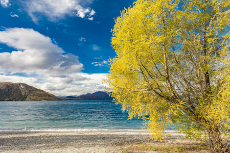 New Zealand landscape, Lake Wanaka, Glendhu Bay - lake and trees