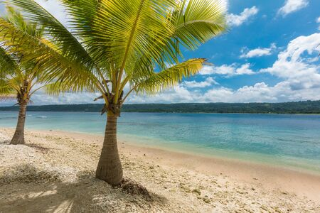 Beach with palm trees, sunny tropical Efate island, Vanuatu