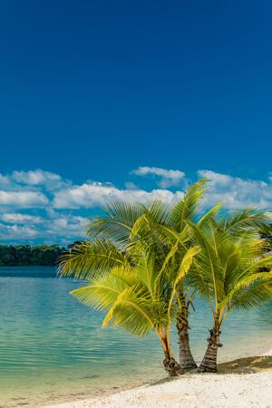 Tropical resort destination in Port Vila, Efate Island, Vanuatu, with beach and palm trees
