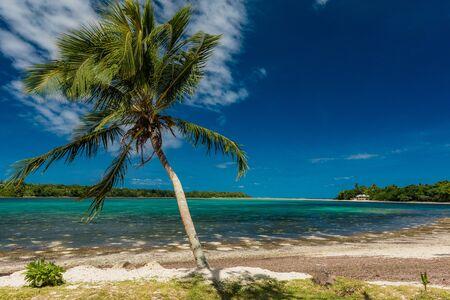 Vibrant Palm trees on a tropical beach, Vanuatu, Erakor Island, Efate
