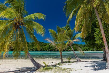 Levendige palmbomen op een tropisch strand, Vanuatu, Erakor Island, Efate Stockfoto