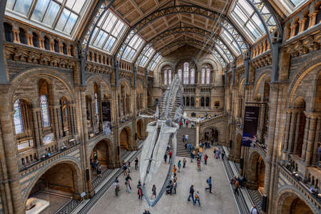 London,England, 16 Sep 2019: The Natural History museum is home to life and earth science specimens and welcomes many visitors every year.