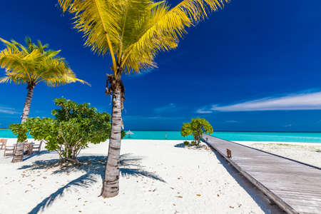 Tropical beach in Maldives with palm trees and vibrant inviting lagoon