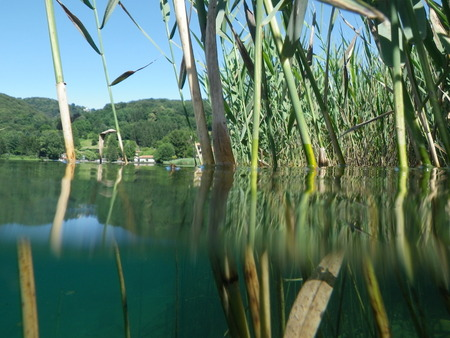 orta: View from a semi-submerged reeds Lake Orta.