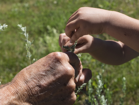 Generations. Grandpa teaches to groom niece plants. Stock Photo