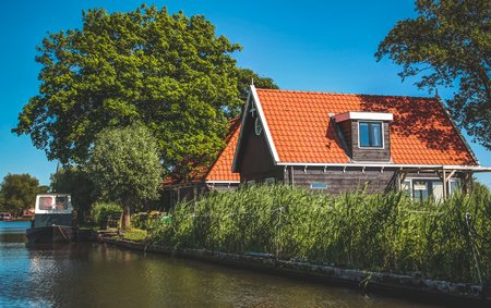 Dutch landscape in the summertime with flowers and plants