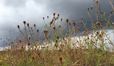 grass and flowers against cloudy sky in summer Stok Fotoğraf