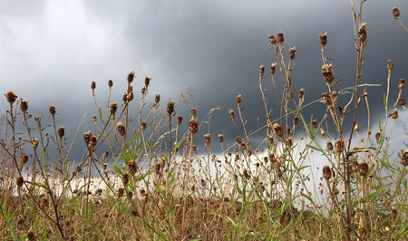 grass and flowers against cloudy sky in summer Stock Photo
