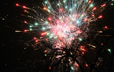 Fireworks behind a tree at new years eve in amsterdam 免版税图像