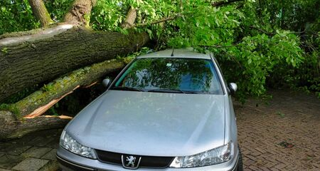 A tree fell on a car during a hurricane. Broken tree on a car close-up in amsterdam netherlands