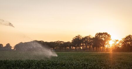 Silhouette of agricultural irrigation system watering cornfield at sunset. Cornfield irrigation using the center pivot sprinkler system. Amsterdam, The Netherlands