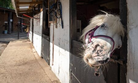 horse standing in a stable on a sunny day in newforest great brittain Stockfoto