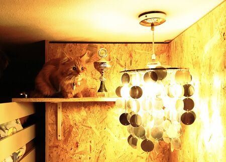 cat on a shelf of a cupboard next to prize and lamp light amsterdam 版權商用圖片 - 146696103