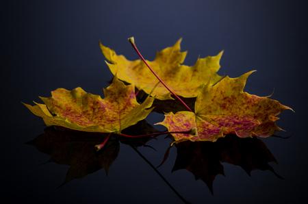 zwarte: Drie bladeren op een zwarte achtergrond