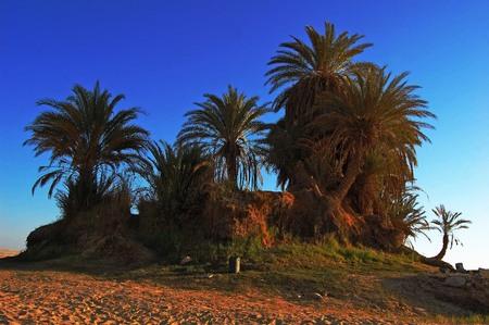 vegatation: An quit oasis in the desert of Sahara.