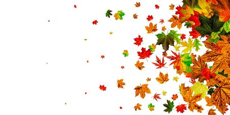 Hojas de otoño aisladas. Hojas de otoño. Fondo de caída de noviembre. Concepto de temporada