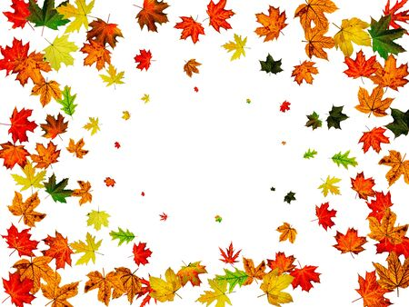 Autumn leaves border. October thanksgiving pattern isolated on white background. Falling leaves concept