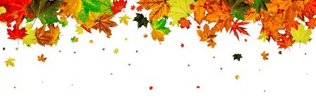 Autumn leaves isolated. Fall leaves. November falling pattern background. Season concept