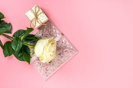 White Rose isolated on pink background. Copy space. Valentines, Women, Wedding Day concept