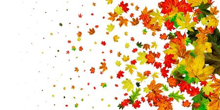 Autumn leaves falling. Season pattern isolated on white background. Thanksgiving concept