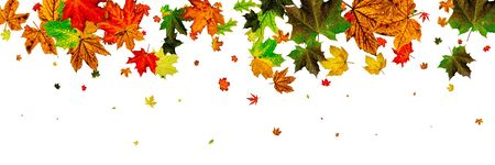 Fall season. Autumn leaves falling pattern isolated on white. Th