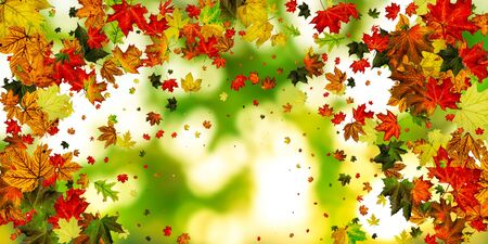 Fall season. Autumn leaves falling pattern isolated on colorful. Thanksgiving concept