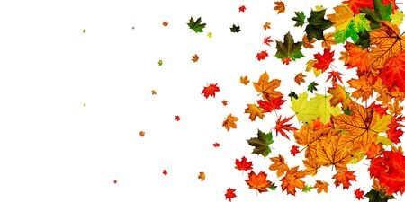 Autumn leaf background. November falling pattern. Thanksgiving season concept