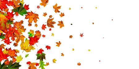 Autumn background. Falling October leaves isolated on white. Season concept
