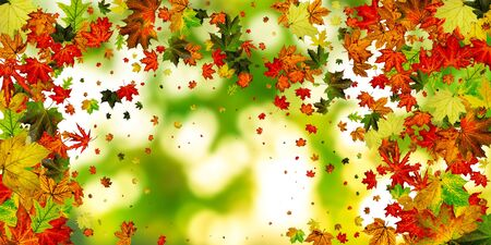 Autumn leaves colorful background. Falling November pattern. Thanksgiving season concept