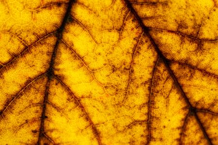 Leaf pattern. Tropical texture. Abstract foliage background. Nat 写真素材