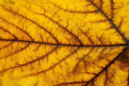 Leaf pattern. Tropical texture. Abstract foliage background.