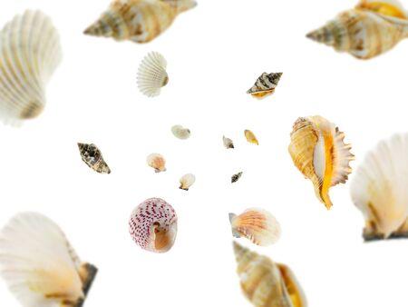 Hello summer. Starfish, seashell falling on white. Tropical sea concept. Banco de Imagens