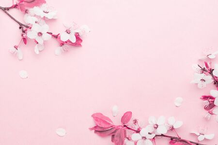 Cherry tree blossom. April floral nature and spring sakura blossom on soft pink background. Banner for 8 march, Happy Easter with place for text. Springtime concept. Top view. Flat lay.