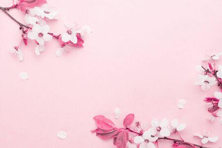 Kirschbaumblüte. Aprilblumennatur und Frühlings-Sakura blühen auf weichem rosa Hintergrund. Banner für 8. März, Frohe Ostern mit Platz für Text. Frühlingskonzept. Ansicht von oben. Flach liegen.