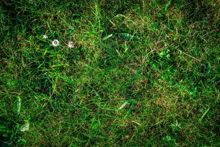 Lawn texture, nature greenery spring pattern. Green grass field background. Flat, lay, copy, space.