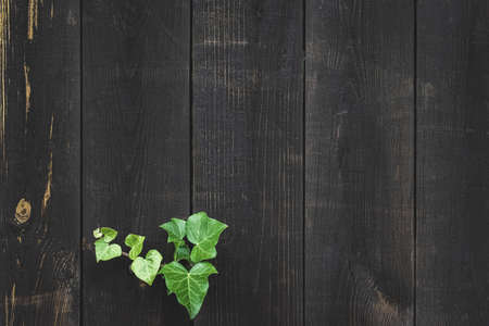 Texture background wood. Old floor wooden pattern. Timber plank surface wall for vintage grunge wallpaper. Dark grain panel board table with copy space. Natural material backdrop 免版税图像