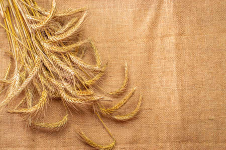 Grains isolated. Whole, barley, harvest wheat sprouts. Wheat grain ear or rye spike plant on linen texture or brown natural organic background, for cereal bread flour. Top view