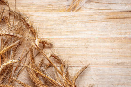 Spike view. Whole, barley, harvest wheat sprouts. Wheat grain ear or rye spike plant on wooden texture or brown natural cotton background, for cereal bread flour. Rich harvest concept