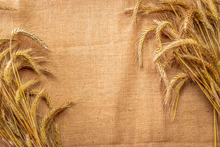Wheat ear. Whole, barley, harvest wheat sprouts. Wheat grain ear or rye spike plant on linen texture or brown natural cotton background, for cereal bread flour. Element of design.
