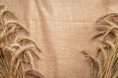 Wheat rye barley oat seeds. Whole, barley, harvest wheat sprouts. Wheat grain ear or rye spike plant on linen texture or brown natural organic background, for cereal bread flour. Top view