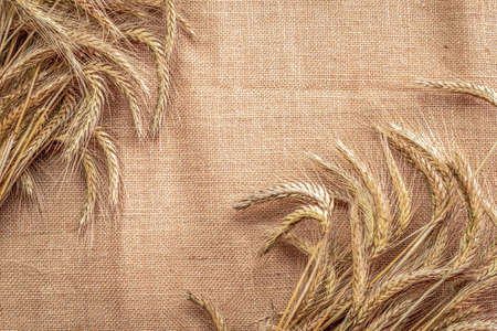 Rye field. Whole, barley, harvest wheat sprouts. Wheat grain ear or rye spike plant on linen texture or brown natural cotton background, for cereal bread flour. Element of design