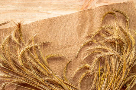 Barley macro. Whole, barley, harvest wheat sprouts. Wheat grain ear or rye spike plant on linen texture or brown natural cotton background, for cereal bread flour. Element of design