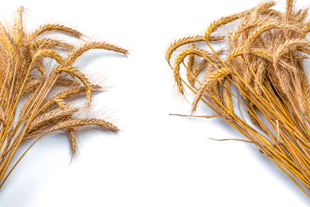 Wheat ear. Whole, barley, harvest wheat sprouts. Wheat grain ear or rye spike plant isolated on white background, for cereal bread flour. Element of design
