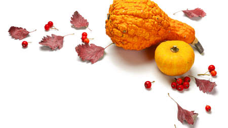 Cozy fall season. Autumn Natural food, harvest with orange pumpkin, fall dried leaves, rowan berries isolated on white background. Flat lay, top view, copy space 免版税图像