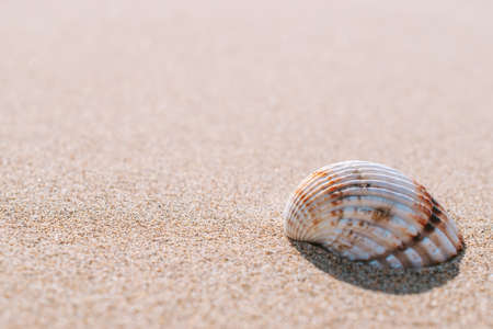 Tropical background with seashells, shells on sand tropical sea beach. Design of summer vacation holiday concept