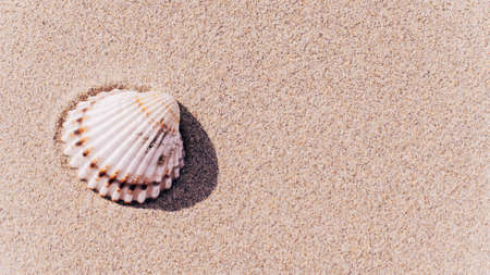 Shells pattern. Seashells, starfishes on sand ocean beach background. Exotic beach with copy space