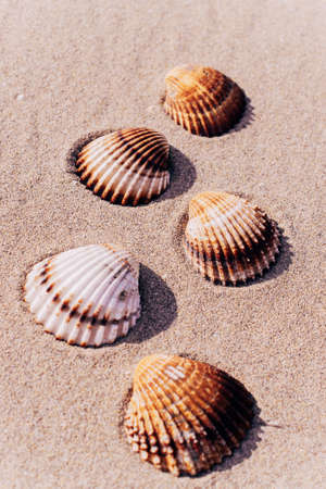 Summer time. Seashells, starfishes on sand ocean beach background. Travel concept in minimal style