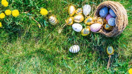 Easter egg hunt. Golden egg with yellow spring flowers in celebration basket on green grass background. Easter hunt concept