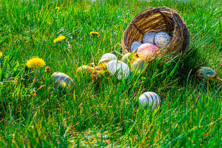 Easter background white. Golden egg with yellow spring flowers in celebration basket on green grass. Happy Easter concept Stok Fotoğraf