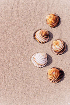 Hello summer with seashells, starfishes on sand ocean beach background. Exotic beach with copy space